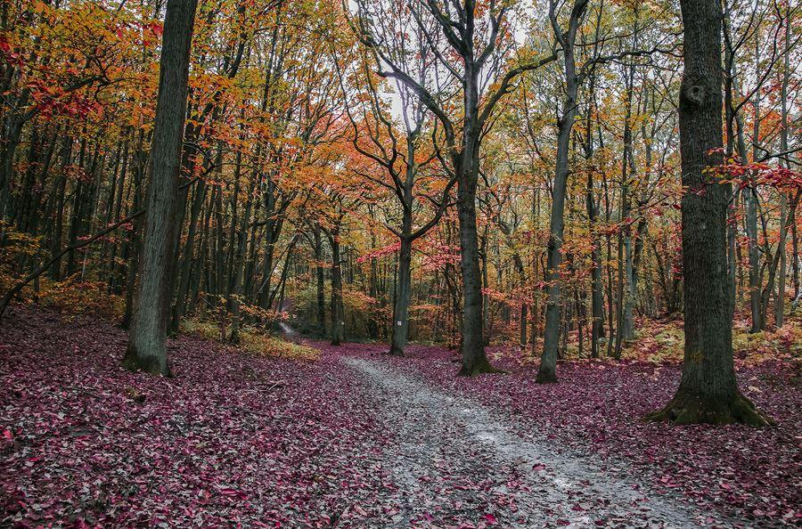 Image de la catégorie Manutention forestière